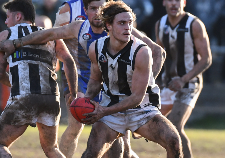Meadows Greyhounds Division 1 Preview – Round 18 | Northern